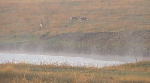 Morningmist_deer