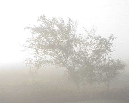 Fog_rolled_in