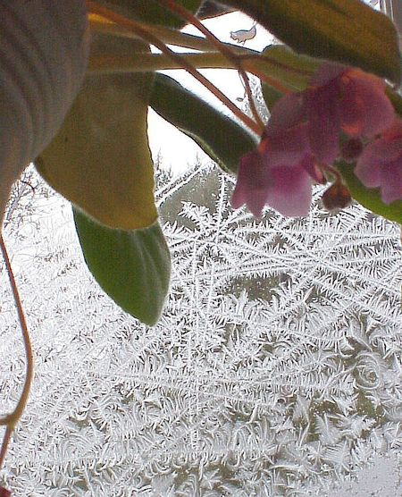 Frost_and_orchid_MVC-009X