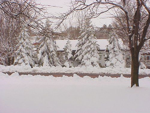 SnowTrees1_Apr15_2011_MVC-446X