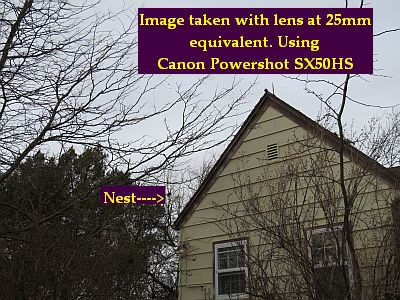 CanonHS_25mm_IMG_0008_400wide_Nest_