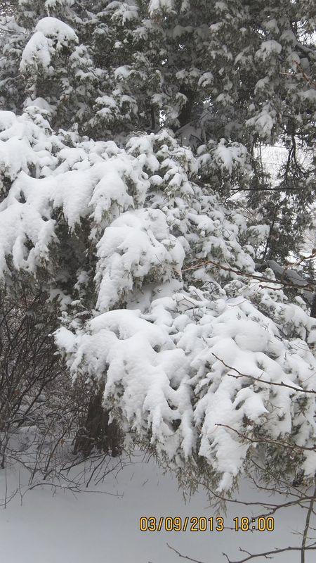 Snow1_Mar09_2013