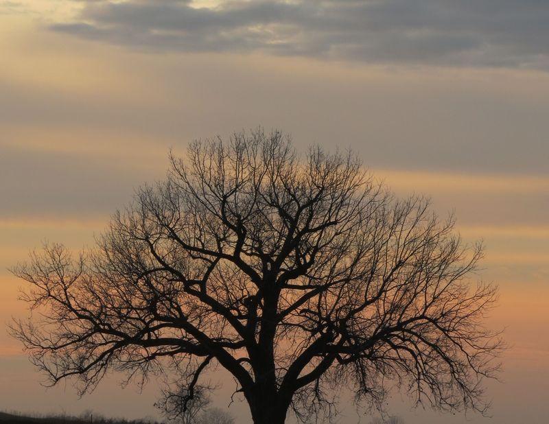 Prairie_sentinal_Dec1_2013_IMG_1863