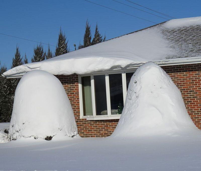Snow_cone_trees_Dec5_2013_IMG_1930
