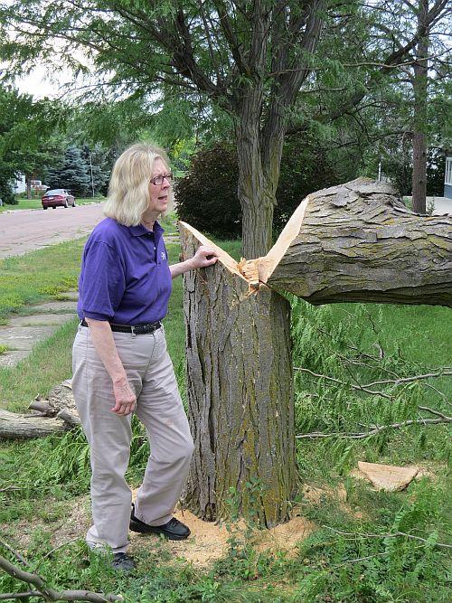 65 year old locust tree stump_MG_2850