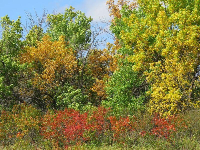 TreeColors_Sept23_2014_IMG_3054
