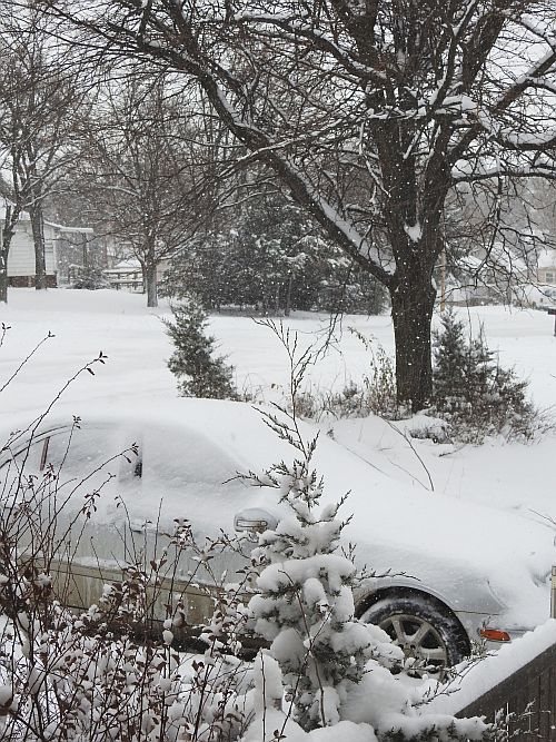 Snow_Winner_Dec1-2015_DSCN0640