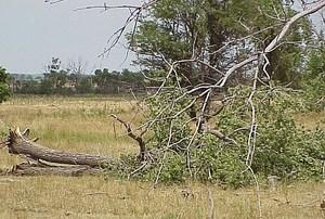 Wind_tree